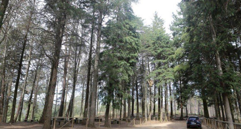 PR7 - Á descoberta da floresta 1