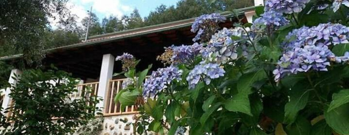 Alojamento - Magnolias Cottage