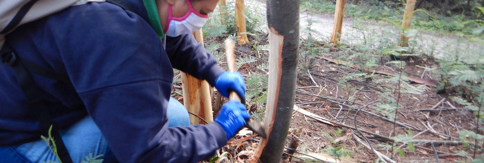 Voluntariado ambiental na Mata do Sobral contou com nova ação.