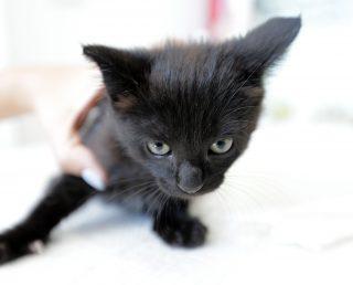 Gatinhos pretos