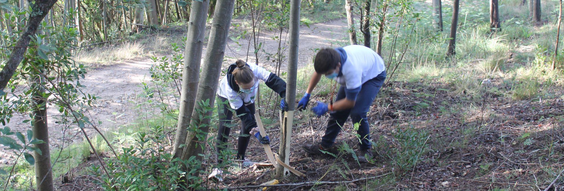 Voluntariado ambiental na Mata do Sobral – nova ação no dia 24 de abril. Inscreva-se!