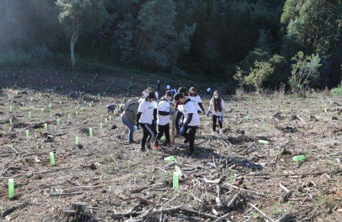 Voluntariado ambiental regressou à Mata do Sobral.